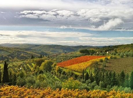 Mùa thu ở Chianti, Tuscany, Ý là mùa thu hoạch nho, ô liu, nấm…
