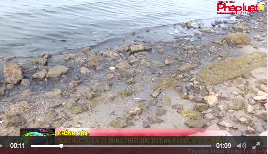 Khánh Hòa: Bồi thường 6,6 tỷ đồng thiệt hại do Nhà máy Đường xả thải