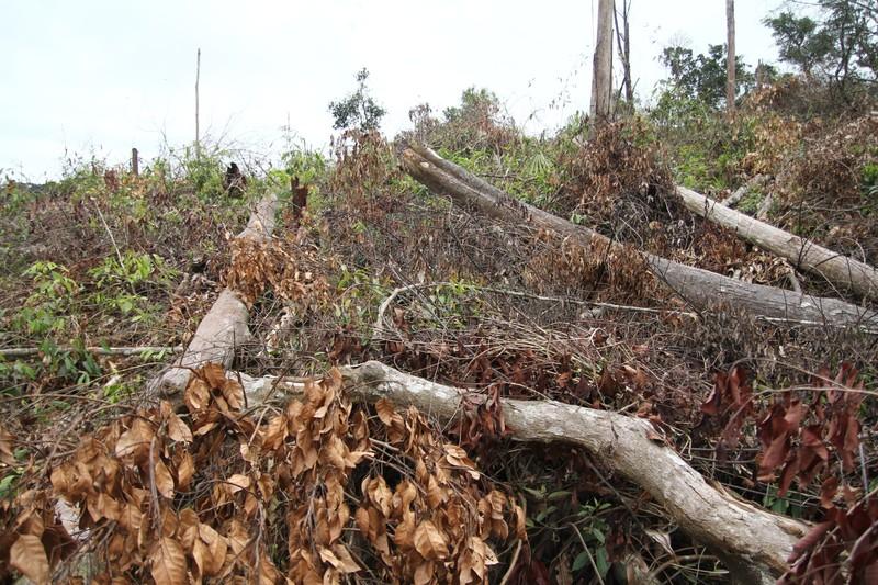 Lâm Đồng: Điều tra vụ phá rừng nghiêm trọng ở Đạ Tẻh