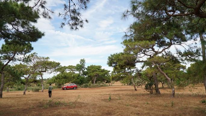 Chuyển đổi 174 ha đất rừng trồng làm sân golf ở Gia Lai: Rừng thông, đồi cỏ hồng vẫn được giữ gìn