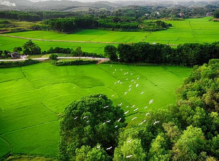 Đầm Hà có nhiều thuận lợi để phát triển các sản phẩm nông nghiệp hữu cơ, công nghệ cao