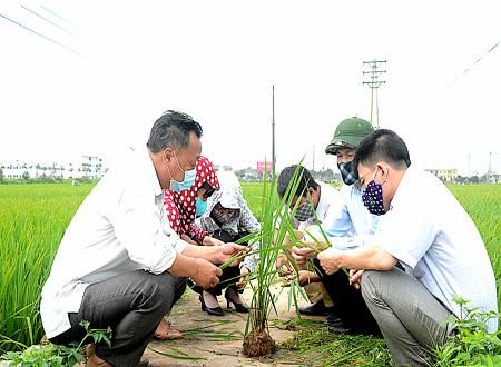 Nam Định khuyến khích người dân tham gia bảo hiểm cho cây lúa