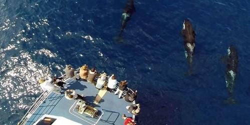 Tour du lịch được bao vây bởi... hàng trăm cá mập