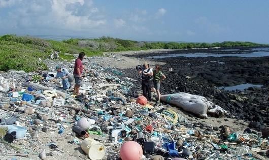 Dọc theo bờ biển là những đám rác thải