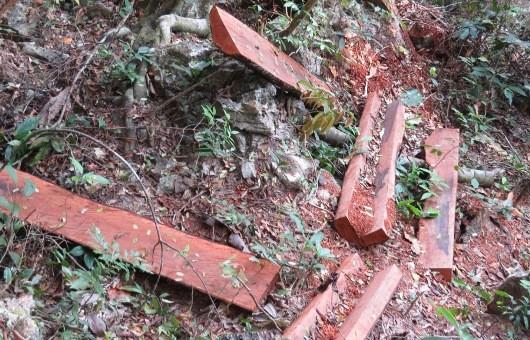Bí thư Tỉnh ủy Quảng Bình chỉ đạo xử lý nghiêm vụ phá rừng gỗ mun trong Vườn di sản Phong Nha
