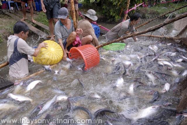Chưa bổ sung DN nuôi tôm và cá tra vào đối tượng hưởng chính sách tín dụng mới