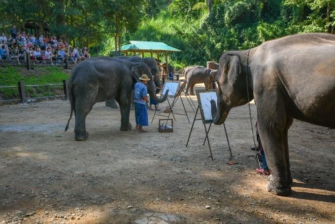 Covid-19 đe dọa số phận hàng nghìn con voi  phục vụ du lịch ở Thái Lan