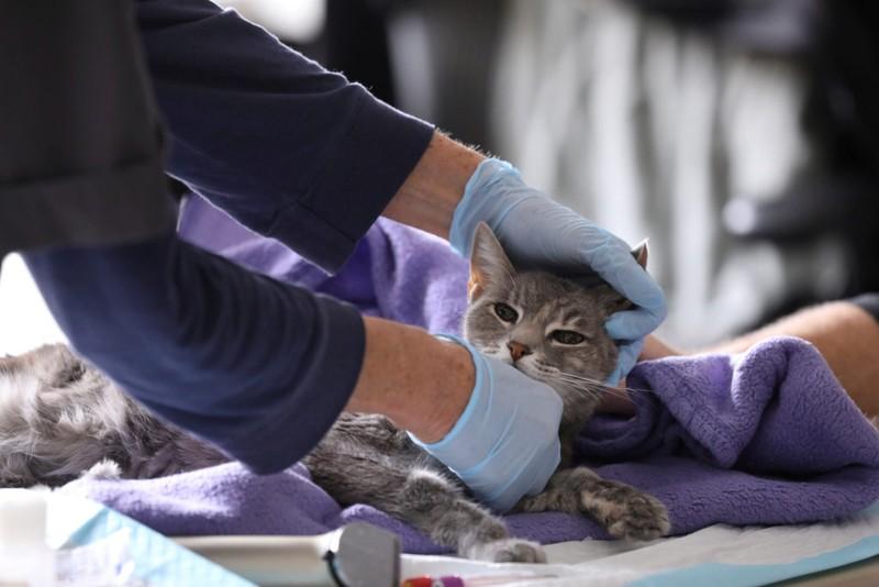 Mèo ở New York đã nhiễm virus corona. Ảnh: PBS