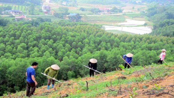 Cần kiểm soát chặt chẽ việc trồng rừng thay thế.  Ảnh minh họa: snntuyenquang.gov.vn