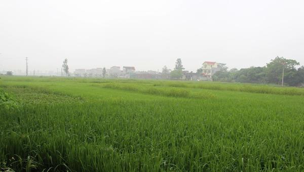 Cho phép Hà Nam chuyển mục đích sử dụng 20,83 ha đất trồng lúa sang đất phi nông nghiệp