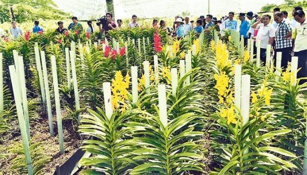 Mô hình trồng lan cắt cành cho thu nhập cao tại huyện Hóc Môn, TP HCM. Ảnh: nhandan