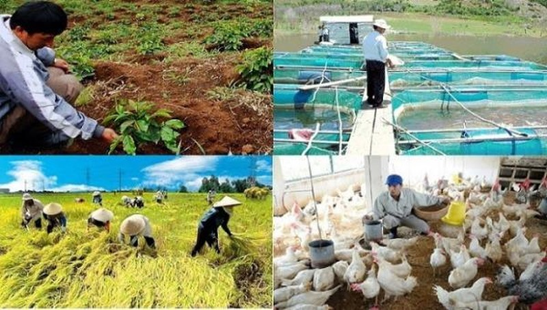 Thực hiện Đề án 61 phải nhằm mục tiêu nâng cao mức sống cho nông dân, xóa nghèo ở nông thôn, miền núi. Ảnh minh hoạ: vietnambiz