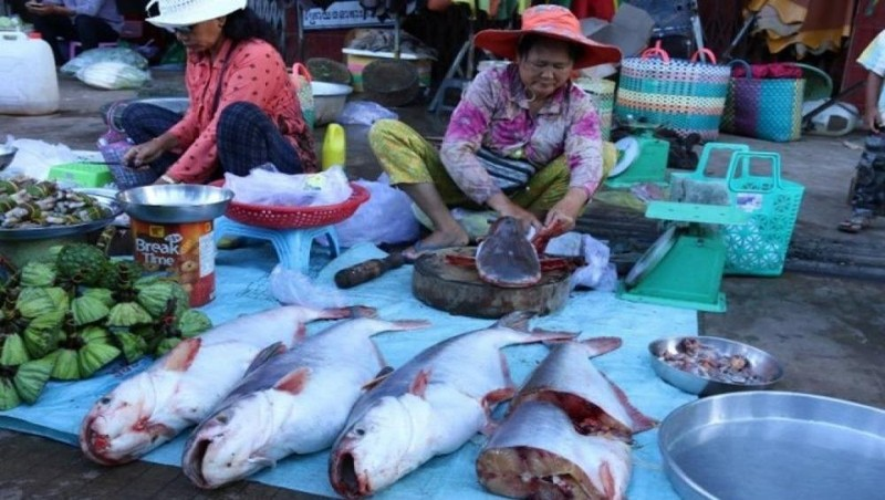 Campuchia hủy bỏ lệnh cấm nhập khẩu cá từ Việt Nam