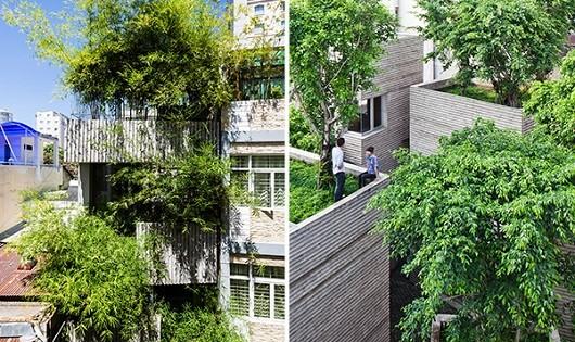 Ngôi nhà xanh mướt do anh Nguyễn Trọng Nghĩa thiết kế.