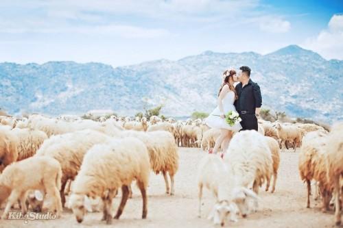 Những đàn cừu tạo nên sự độc đáo cho bộ ảnh cưới chụp tại Ninh Thuận