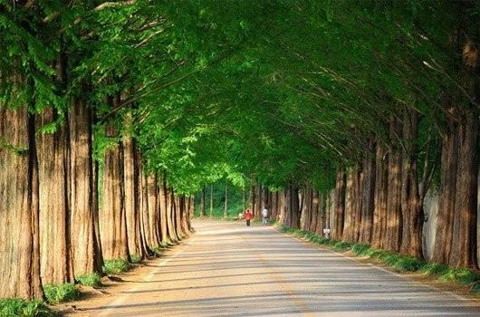 Các con đường mùa thu lãng mạn vòng quanh thế giới