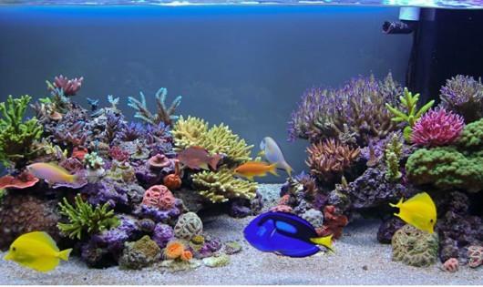 Tuyệt chiêu vệ sinh bể cá sạch và đẹp