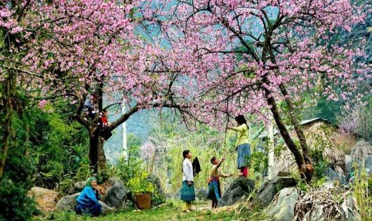 Hòa mình với những con đường hoa tuyệt đẹp ở Việt Nam