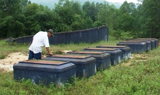 Sự thật bất ngờ vụ đóng đinh lên 124 ngôi mộ