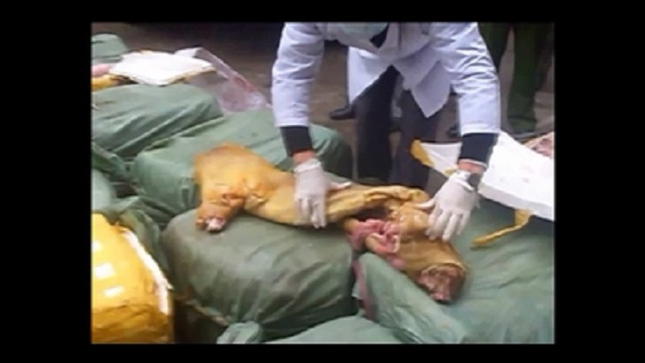 Bắt xe khách chở 2 tấn nội tạng, thịt thối