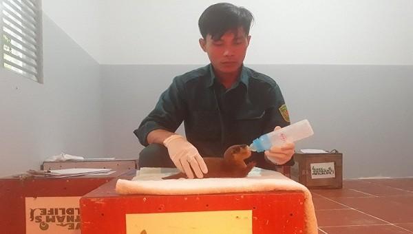 Nhân viên SVW chăm sóc cho rái cá tại trung tâm cứu hộ tại VQG Pù Mát.