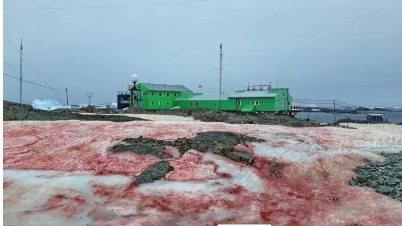 """Hình ảnh """"tuyết máu"""" tại Cơ sở nghiên cứu Vernadsky Nằm trên đảo Galindez của Nam Cực."""