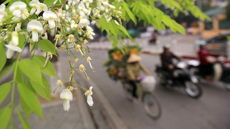 Hôm nay, Hà Nội trời nắng, gió nhẹ.