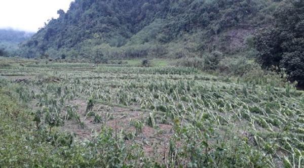 Từ đầu năm đến nay, dông lốc, sét, mưa đá, mưa lớn đã làm 30.000 ha lúa, hoa màu bị thiệt hại.