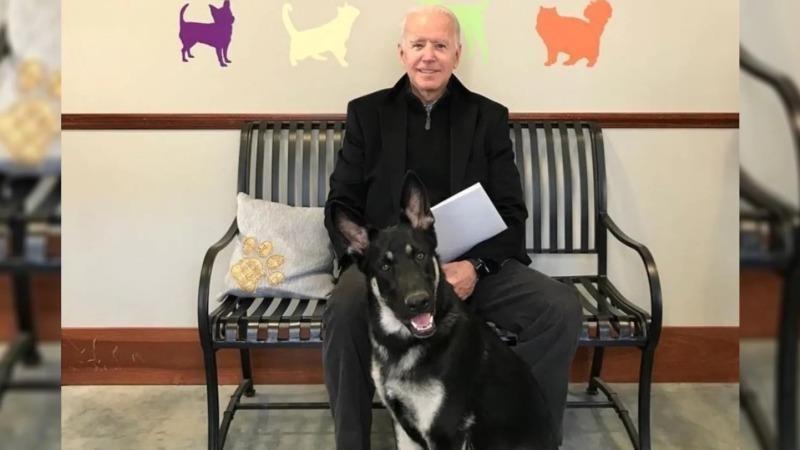 Tổng thống Trump gửi lời thăm khi ông Biden bị trẹo chân lúc chơi với chó cưng