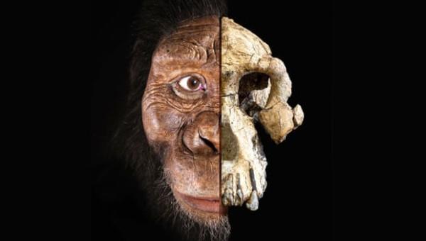 Phát hiện bất ngờ về tổ tiên loài người