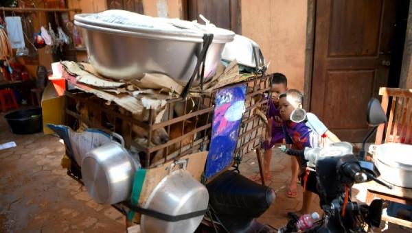 Nguy hại khôn lường do 'nạn thịt chó' ở Campuchia