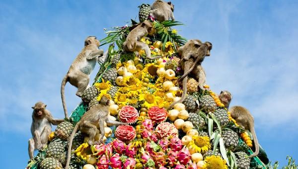 Tiệc buffet độc đáo dành cho khỉ ở Thái Lan