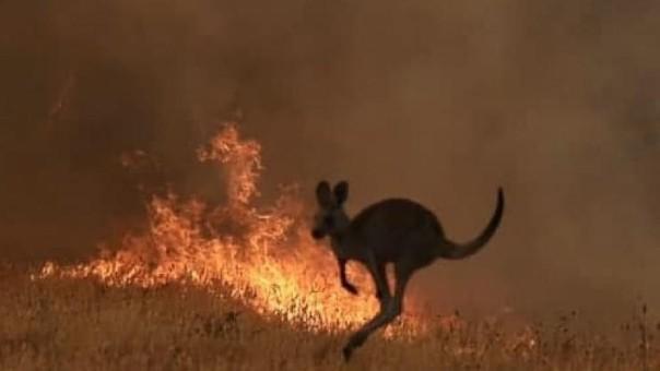 24 người bị truy tố vì tội cố tình phóng hỏa gây cháy rừng ở Australia