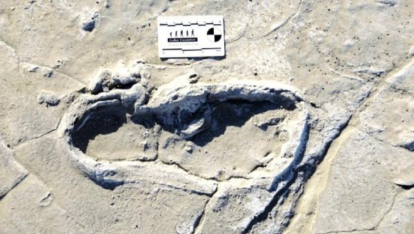 Tìm thấy dấu vết mới của người cổ đại tại Tanzania