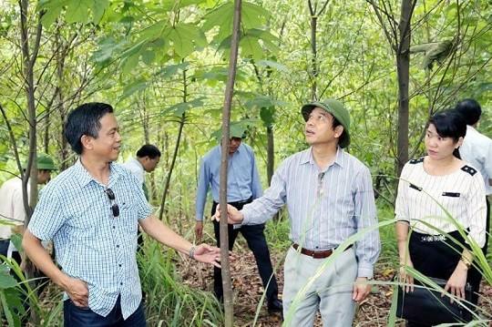 Chị Hoàng Thị Thế cùng các đồng nghiệp bên cây Trẩu được trồng thành công trên đất thải than