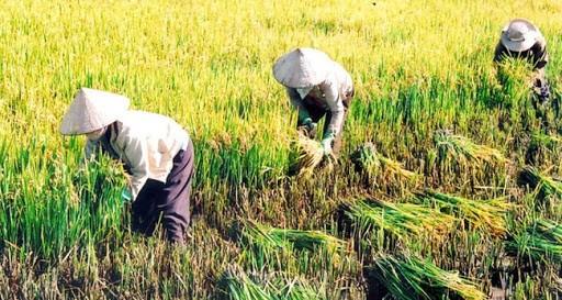 Sẽ có Hội nghị toàn quốc về an ninh lương thực của Việt Nam. Ảnh: VOV1