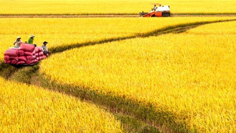 Đến năm 2030, nông nghiệp Việt Nam phấn đấu đứng top 15 nước phát triển nhất thế giới