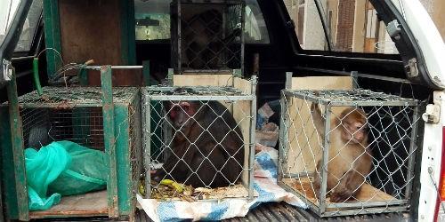 Vườn Phong Nha - Kẻ Bàng cứu hộ 6 cá thể quý hiếm đang bị thương