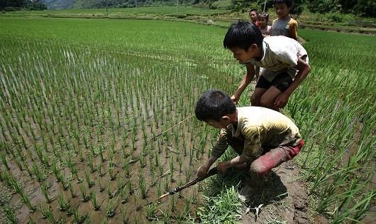 Hàng ngày, tầm 10 giờ, nhóm trẻ người Mường ở xóm Lở lại rủ nhau đi quanh những thửa ruộng ở thung lũng Lũng Vân để săn bắt cá cải thiện bữa cơm của gia đình.