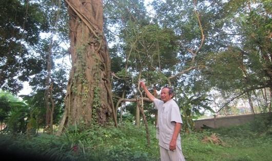 Cây si, cọ là chứng tích gắn với lịch sử của làng