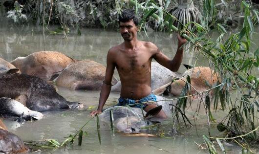 Cơn cuồng phong kinh hoàng khiến hơn 4.100 người chết ở Bangladesh