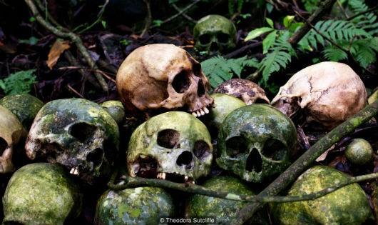 """Bí ẩn """"cây thần"""" khử...mùi thối xác người."""