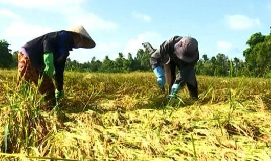 Người dân vẫn sản xuất nông sản nhỏ lẻ