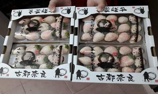 Dâu tây bạch tuyết gây sốt tại thị trường Việt Nam