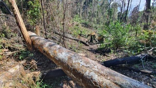 Phá rừng đang là vấn đề nhức nhối tại Lâm Đồng.