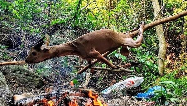 TBT tạp chí Sông Hương bị hàm oan giết hại, tiêu thụ động vật quý hiếm?