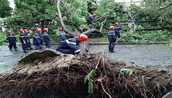 Nhiều cây xanh bị gãy đổ do ảnh hưởng cảu bão số 5.