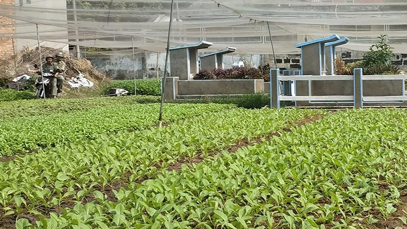 Phường Hiệp Thành chưa làm đúng chỉ đạo vụ 'cất nhà, trồng rau trên đất mộ'
