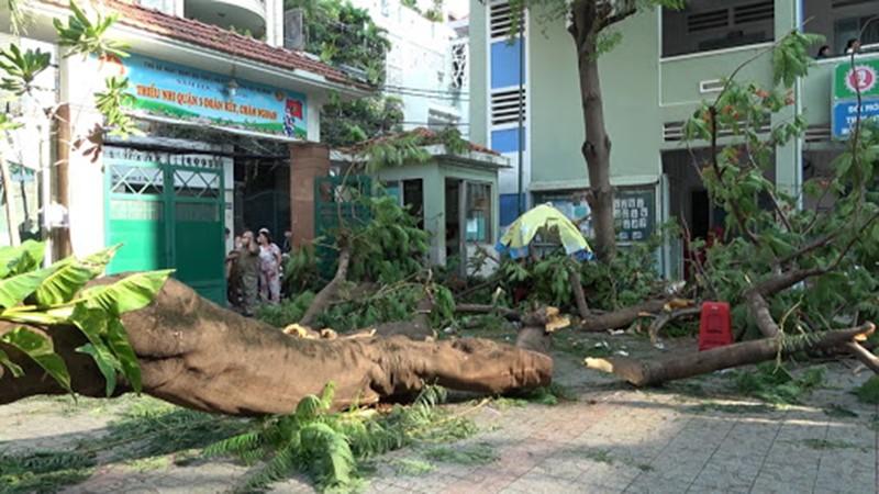 TP HCM yêu cầu đảm bảo an toàn trong trường học, tránh tai nạn đáng tiếc.