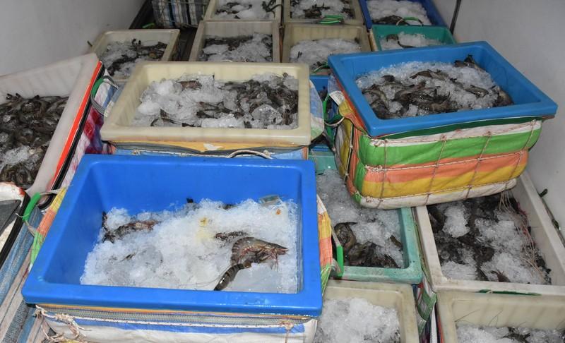 Bạc Liêu thu giữ gần 400kg tôm chứa tạp chất